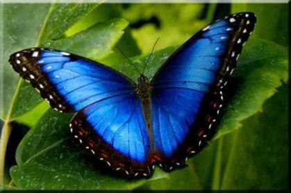 morpho-bleu-3