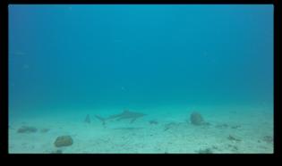 Capture d'écran 2016-02-16 à 14.29.55