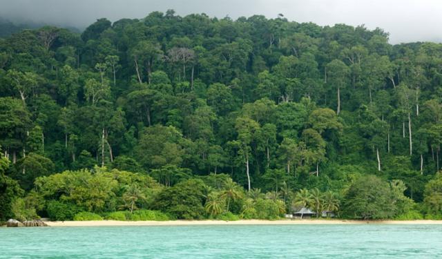 The-thick-jungles-of-Tioman-island